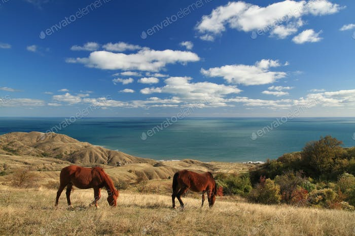 Wild horses on the sea landscape