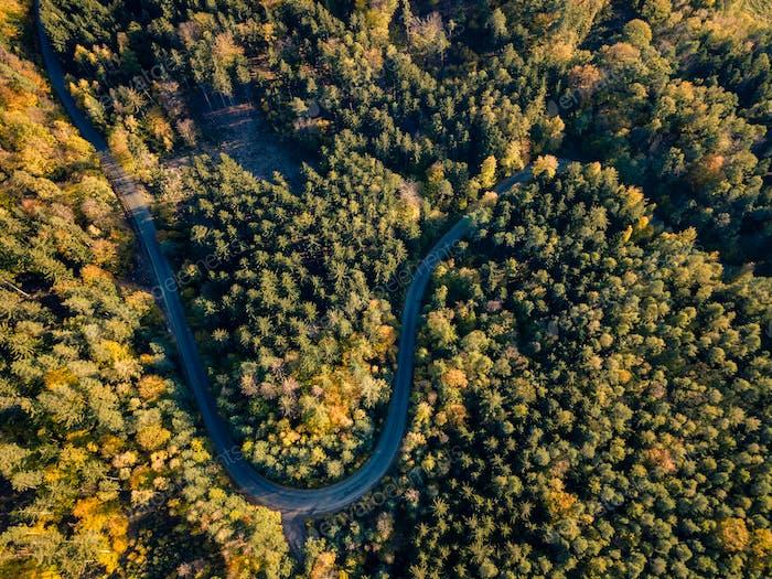 Carretera en el Bosque de otoño vista Aéreo