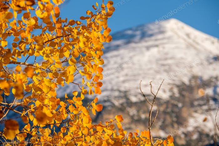 Autumn in Rocky Mountains, Colorado