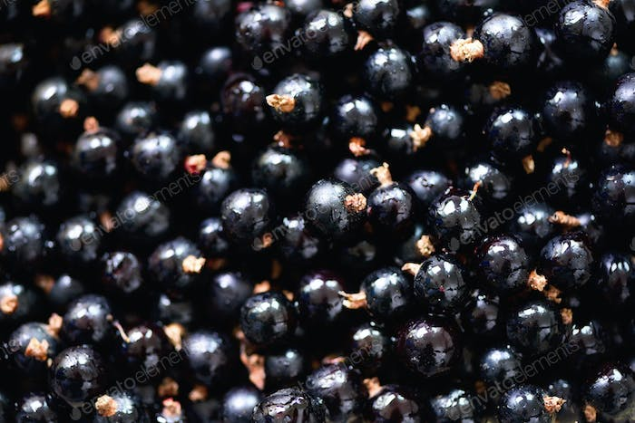 Organic black currant backgound with copy space. Top view, close up. Vegan and vegetarian concept