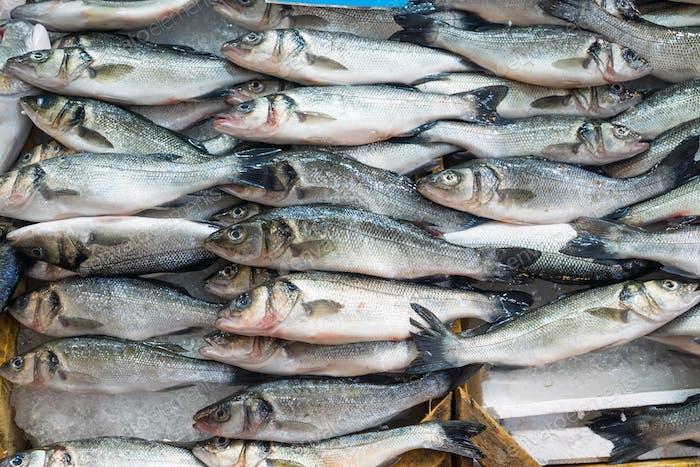 Frisches Fischangebot zum Verkauf