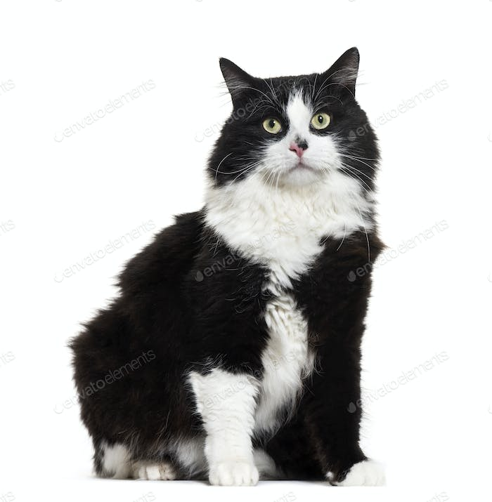 Mixed-breed cat sitting, cut out