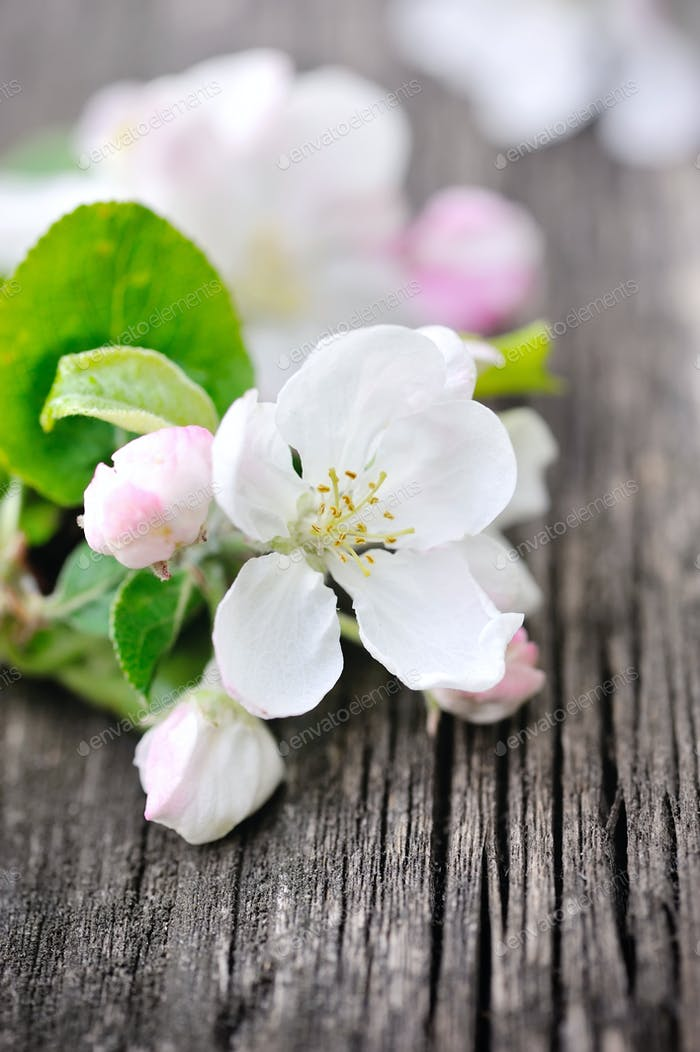 Apple blossom on a old wooden background