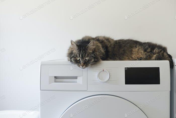 Cute cat lying down on the washing machine