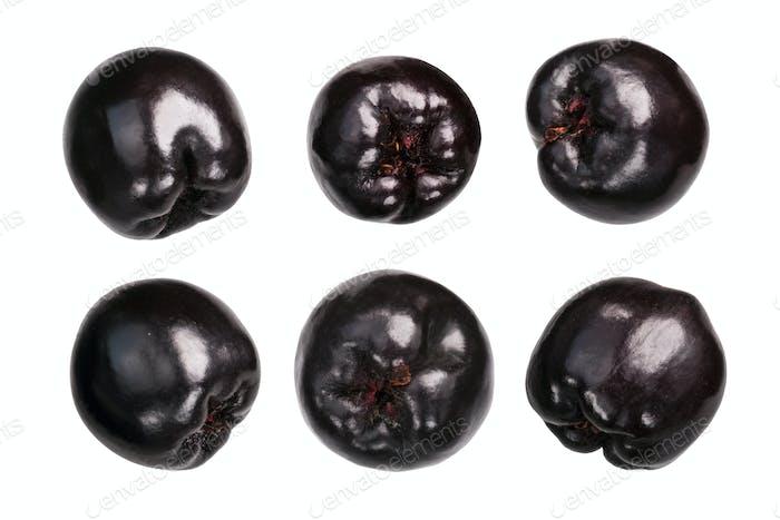 Chokeberry aronia melanocarpa, paths