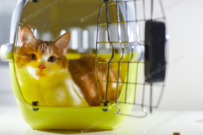 Domestic cat in the cage