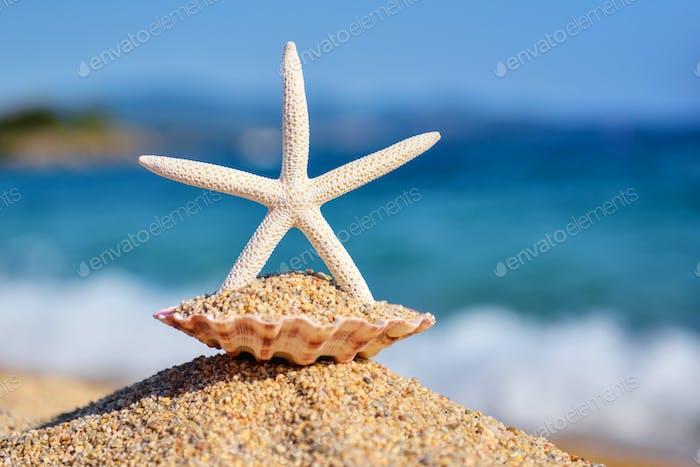 Ein weißer Seestern am Strand vor dem Hintergrund des Meeres und dem blauen Himmel an einem heißen sonnigen Tag