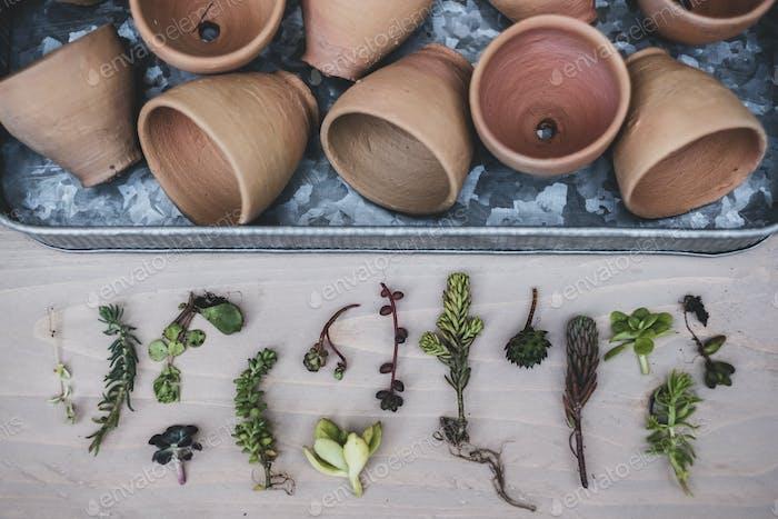 Hoher Winkel Nahaufnahme der Auswahl von kleinen Sukkulenten und Terrakottatöpfen auf Metalltablett.