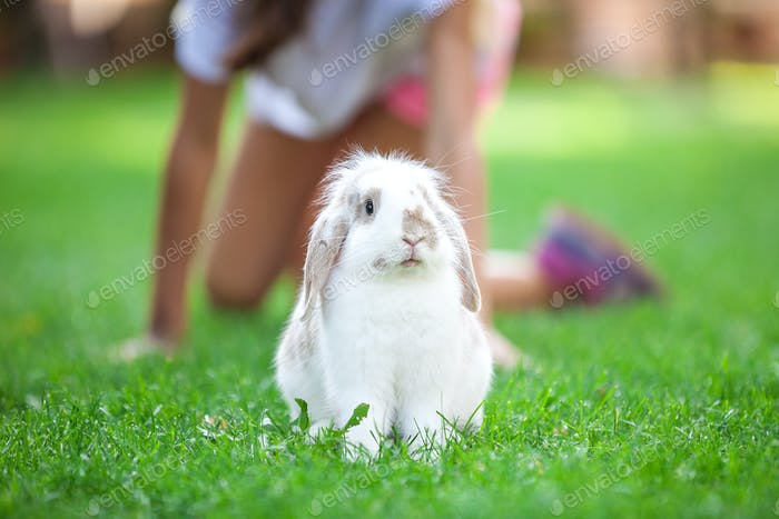 Pet rabbit on grass in park, young girl in background playing with him