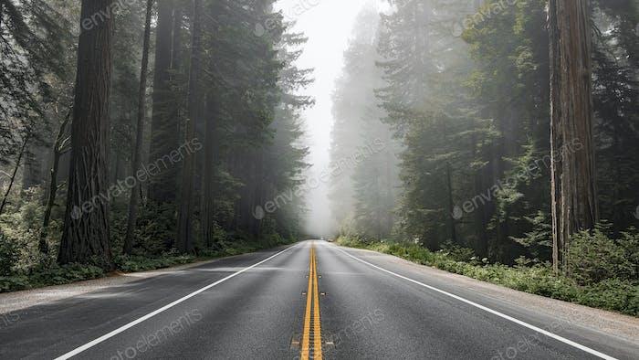 Malerische Route im Redwood National Forest in Kalifornien, USA