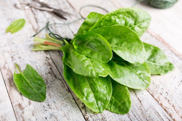 Fresh organic sorrel leaves