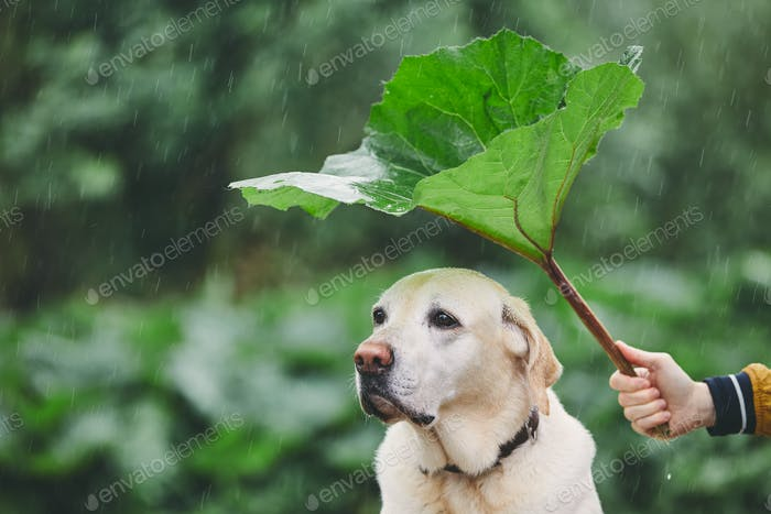 Rainy day with dog in nature
