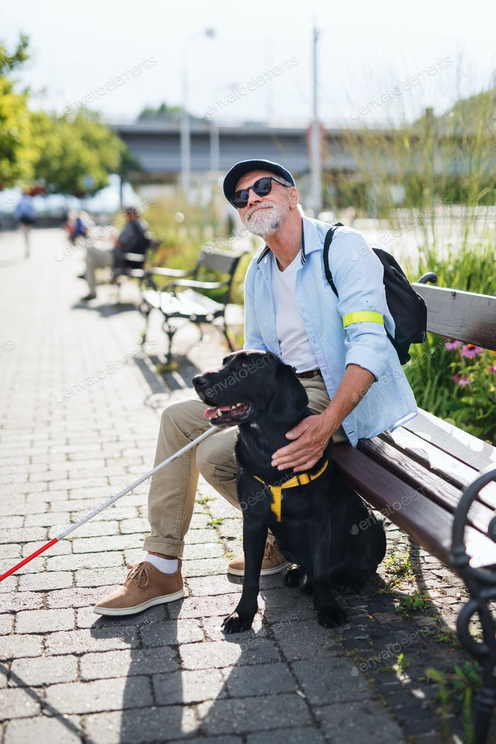 Senior blind man with guide dog sitting on bench in park in city.