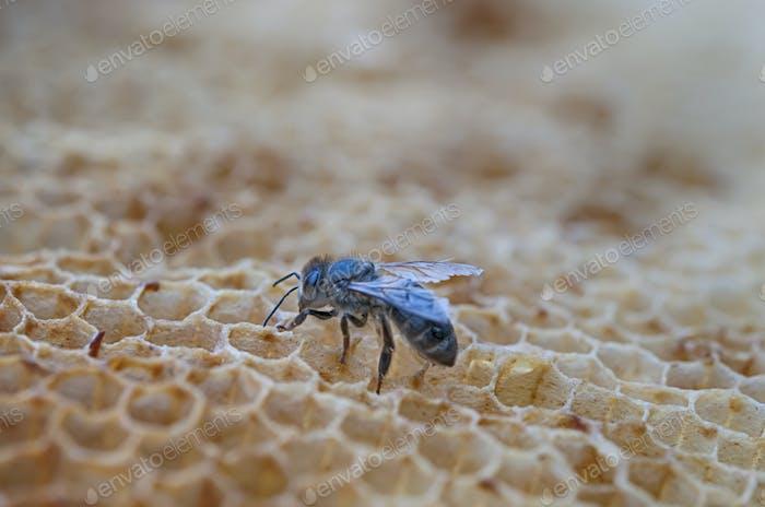 Arbeits Biene
