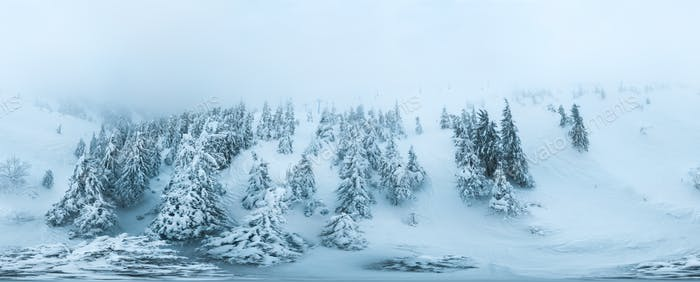 Spherical aerial snow-covered panorama of spruce trees