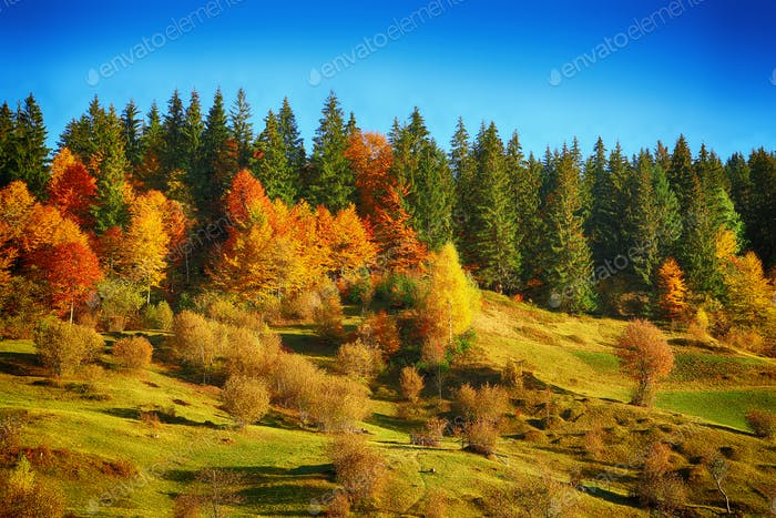 Colorfull trees on a hill. Autumnal landscape