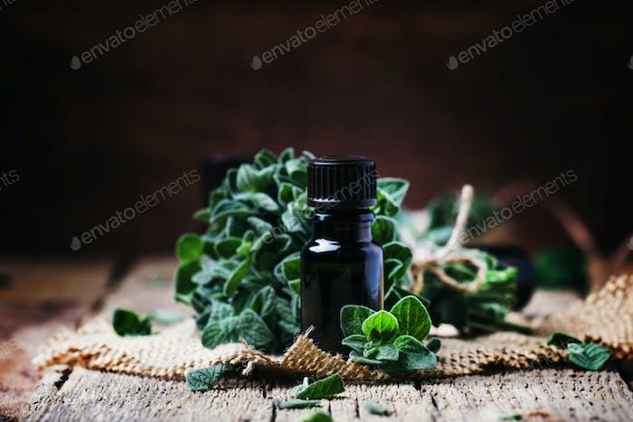 Organic essential oregano oil in a glass bottle