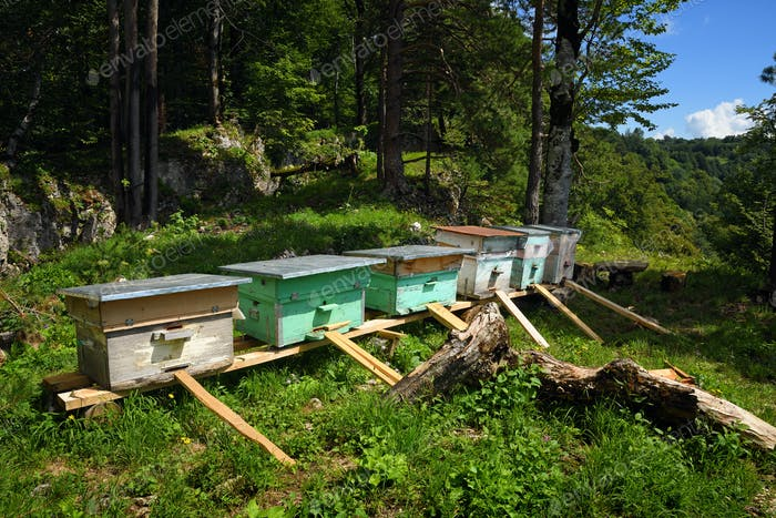 Beehives in summer mountain forest