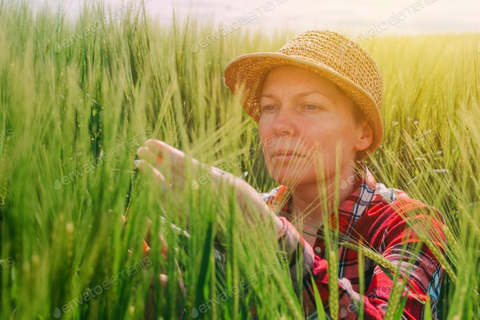 Female farmer examining wheat ears in field