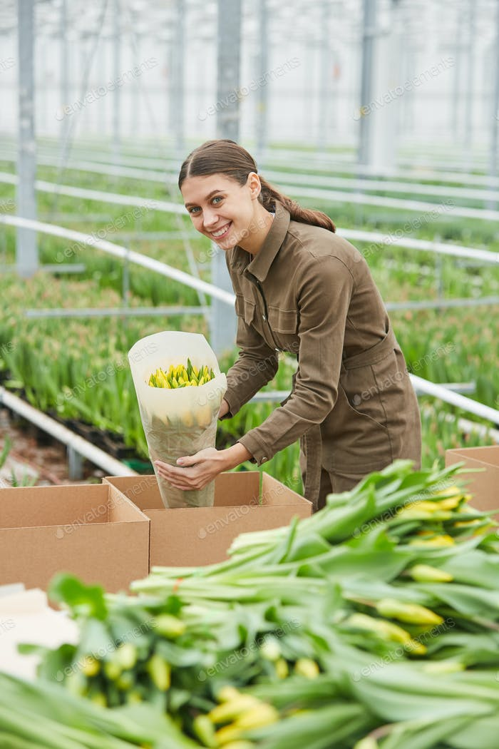 Young Woman Packing Tulips in Plantation