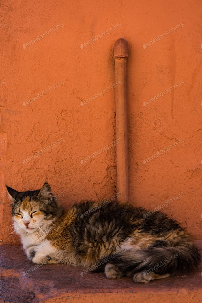 Cat resting beside red painted wall in Morocco