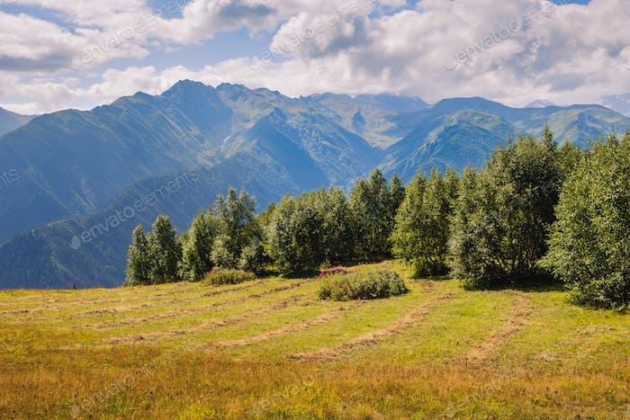 Blick auf den Kaukasus Berge und Wiesen in Svaneti, Georgien