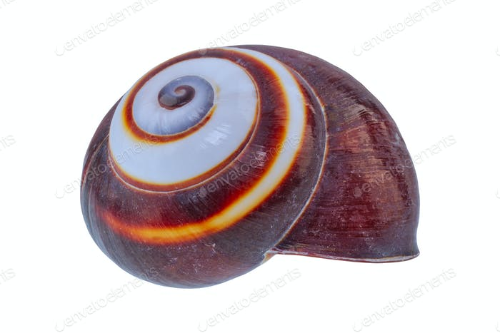 Snail shell on a white background