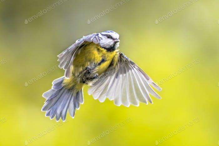 Fliegender Vogel auf hellgrünem Hintergrund