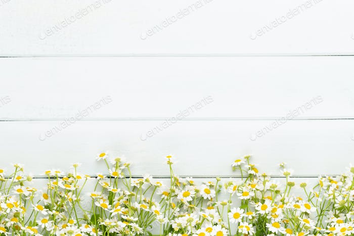 Chamomile flowers floral framee. Flat lay, top view.