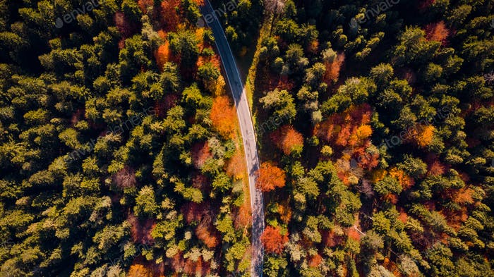 Road Trough Forest at Fall Season. Top Down Drone. Colorful Foli
