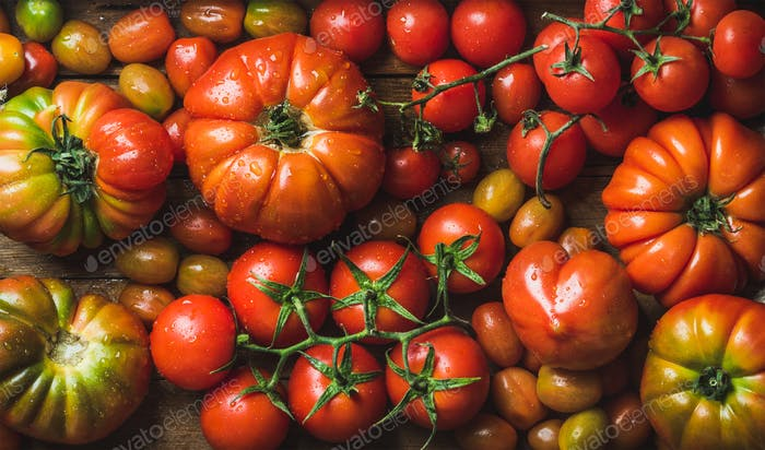 Colorful tomatoes of different sizes and kinds