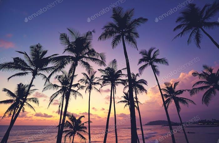 Tropical purple sunset