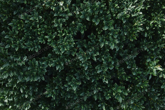 close up of green leaves of bush in garden