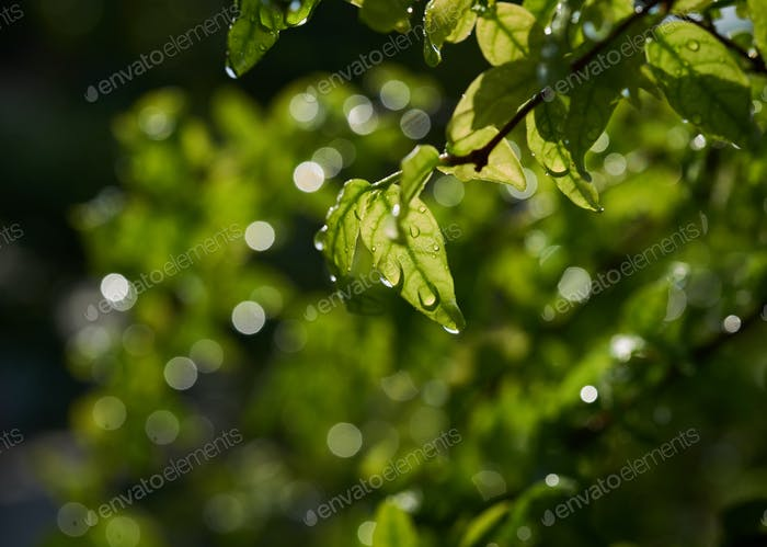 Close-up view of green leaves with droplets on a rainy day