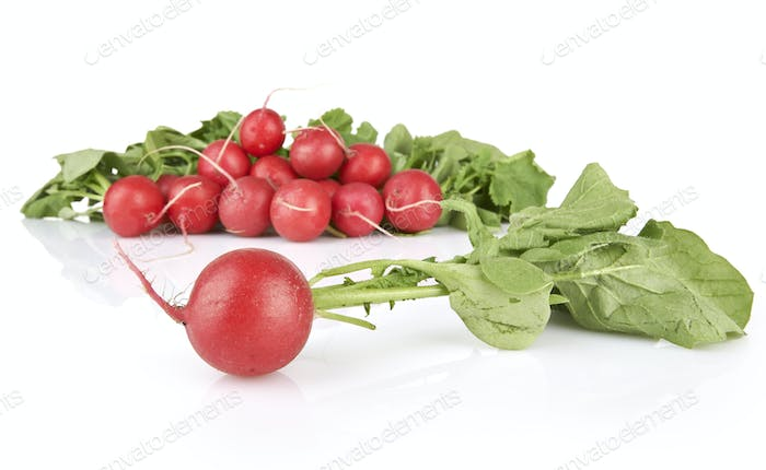 Small garden radish isolated