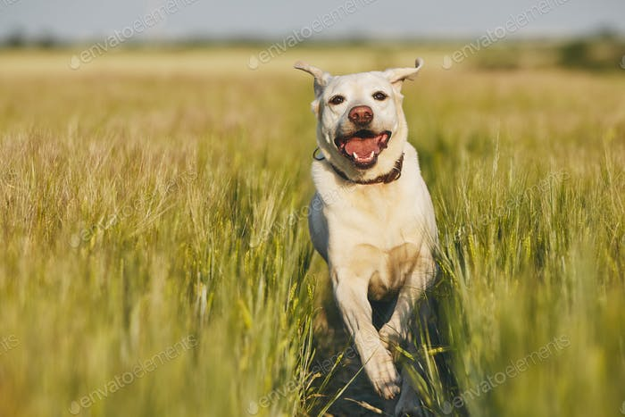 Happy dog in countryside