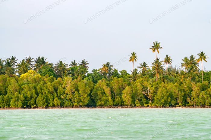 Tropical coastline with palms