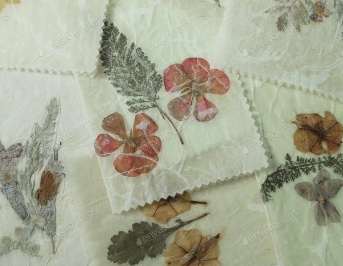 Dried Pressed flowers, Grunge Background, Antique flora parchment paper.