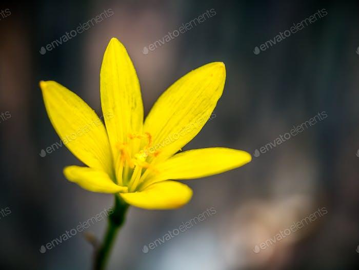 Yellow flower in the dark