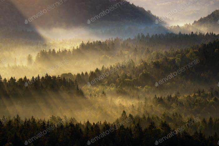 Beautiful foggy forest during autumn sunrise, Saxon Switzerland, Germany