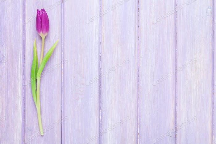 Purple tulip on wooden table