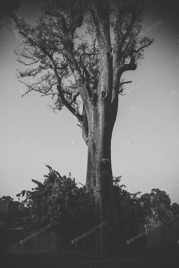 Einsamer Baum. Monochrom