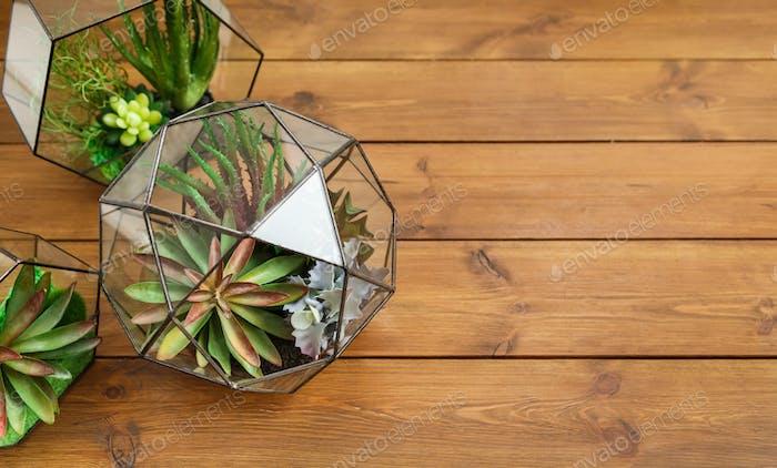 Composition of florarium vases, top view copy space