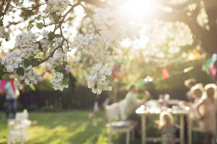 White blossom and people in the background sitting at picnic table