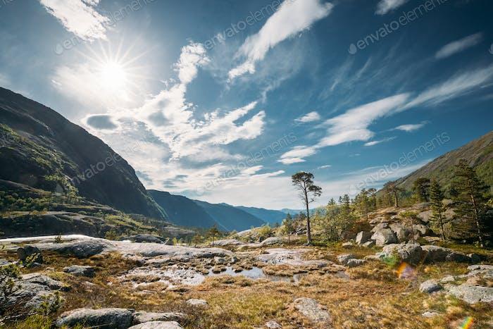 Kinsarvik, Hordaland, Norwegen. Sommerwald In Hardangervidda Bergplateau. Berühmte norwegische