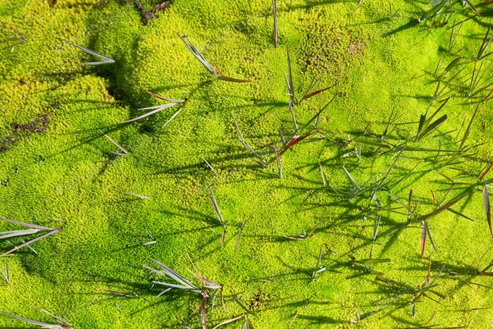 Moss texture wit leaves