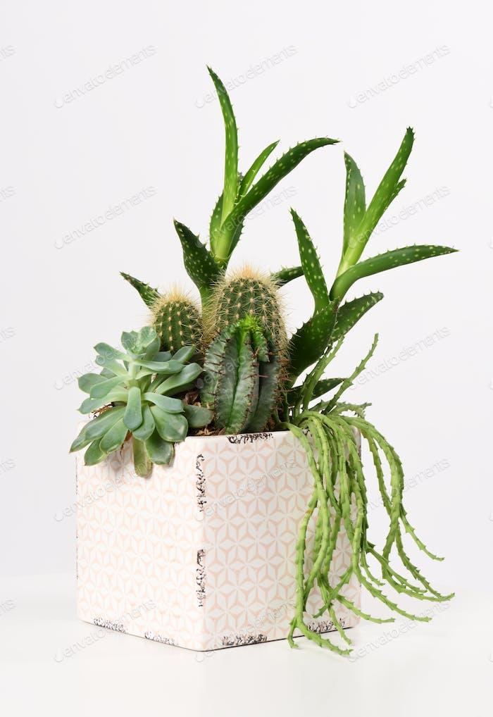 pot with mixed succulent plants