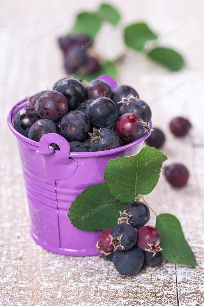 Wild berries in a bucket
