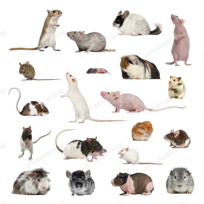 Large collection of rodent, pet and exotic, in different position