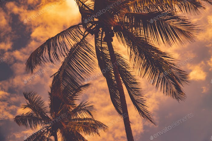 Palm trees over sunset sky background